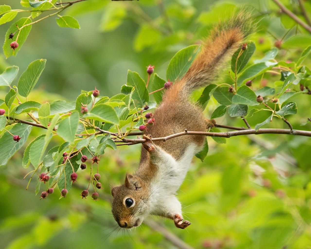 Fotos von Hörnchen Ast Tiere Eichhörnchen ein Tier
