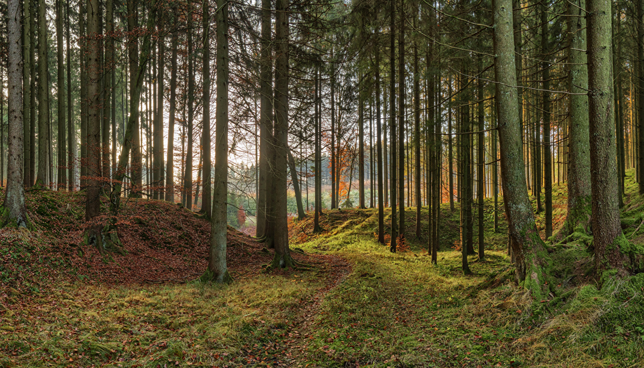 Picture Bavaria Germany Nature Autumn park Moss Trees Parks