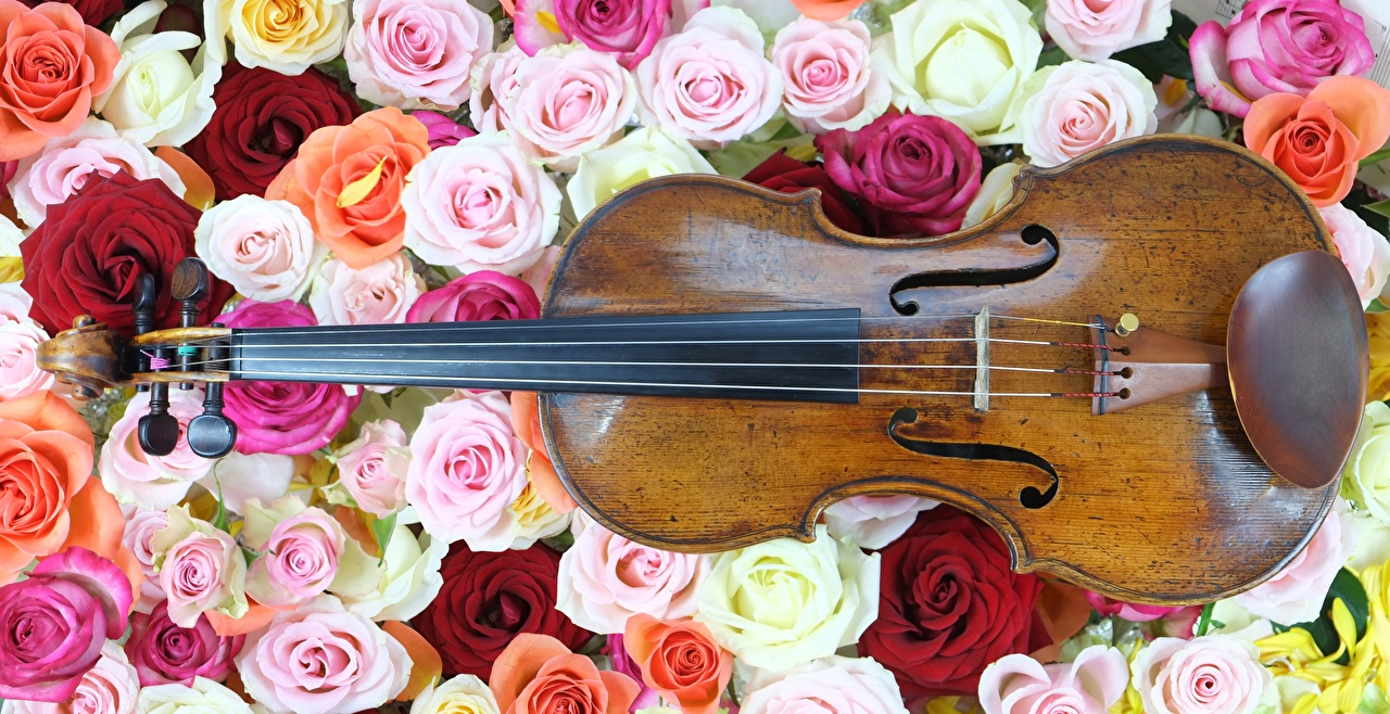 Desktop Wallpapers Violin rose flower Many Musical Instruments Roses Flowers