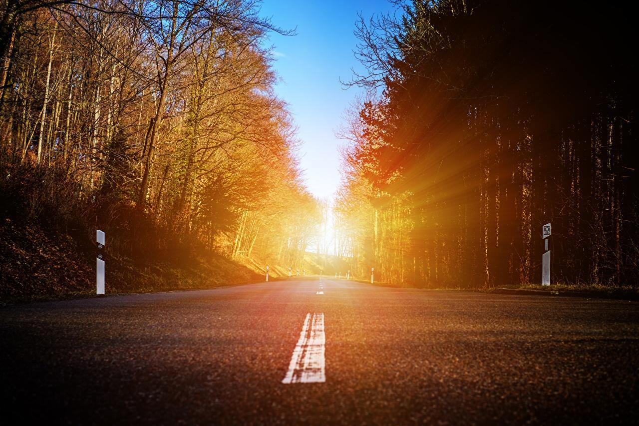 壁紙 道 森林 アスファルト 木 光線 自然 ダウンロード 写真