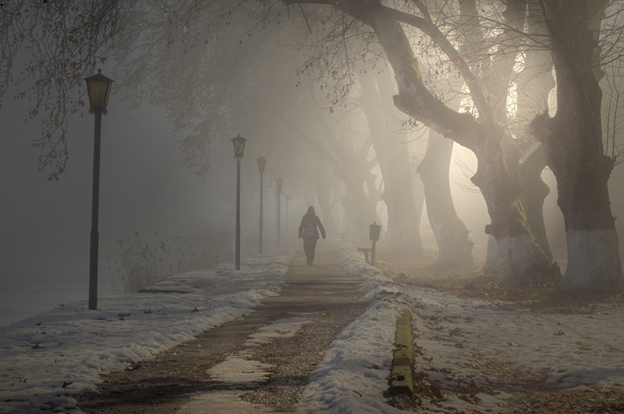 Desktop Wallpapers Fog path Walking park Street lights Trees Cities walk Trail Stroll Parks
