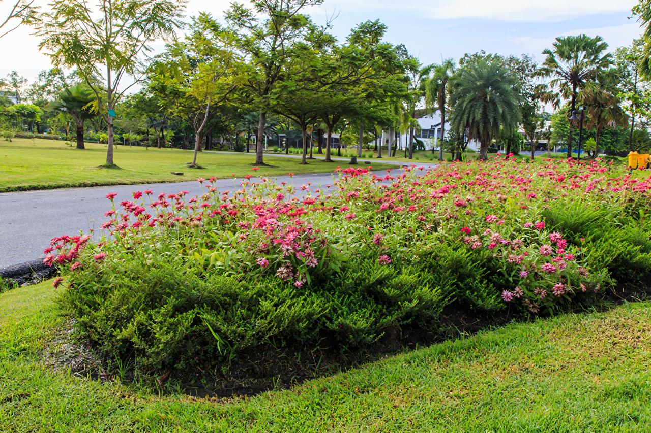 Fotos von Thailand Suan Luang Rama public park Natur Park Cineraria Strauch