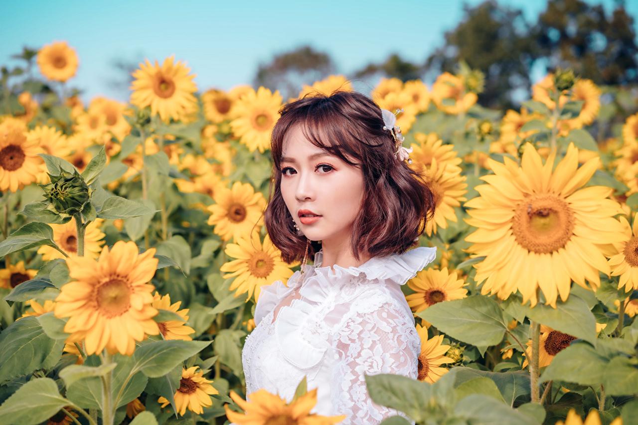 Foto Braune Haare unscharfer Hintergrund Mädchens Acker Blüte Asiaten Sonnenblumen Starren Braunhaarige Bokeh junge frau junge Frauen Blumen Felder Asiatische asiatisches Blick