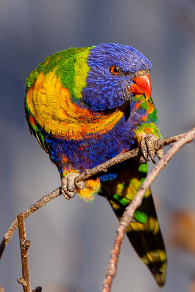 Wallpaper bird parrot animal  for Mobile phone Birds Parrots Animals