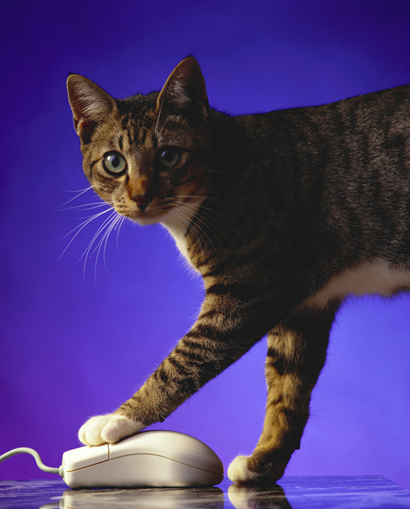 Desktop Wallpapers Cats Mouse computing Paws animal Colored background  for Mobile phone cat Animals