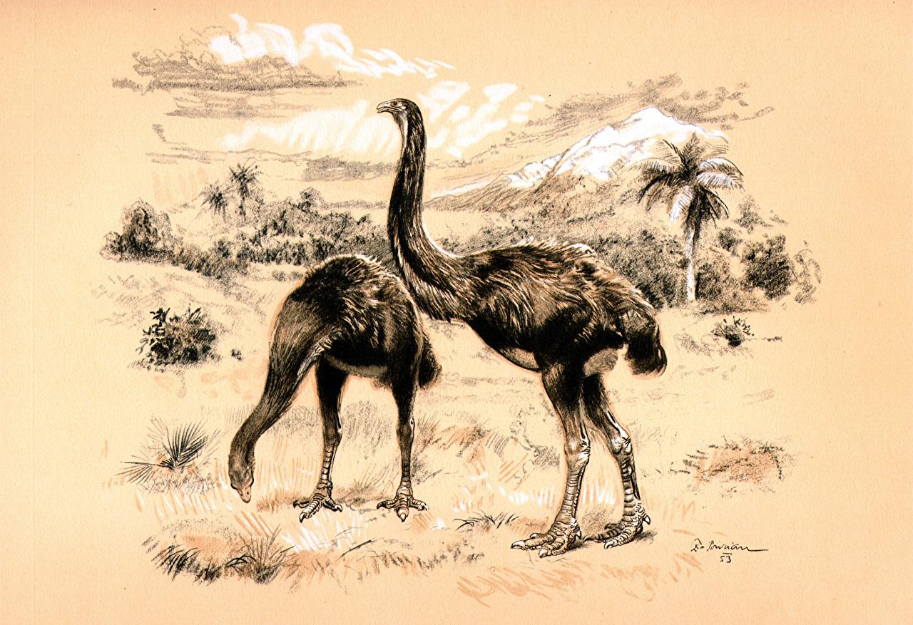 Achtergronden bureaublad Zdenek Burian Dinornis een dier Oude dieren Dieren