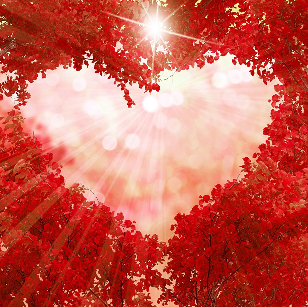 La Luz del Amor