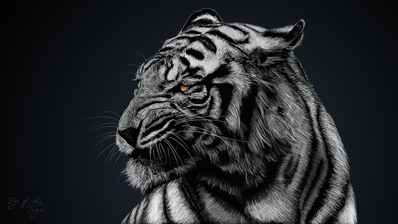 Achtergronden bureaublad Tijgers Pantherinae Snuit een dier Geschilderde tijger Dieren getekende