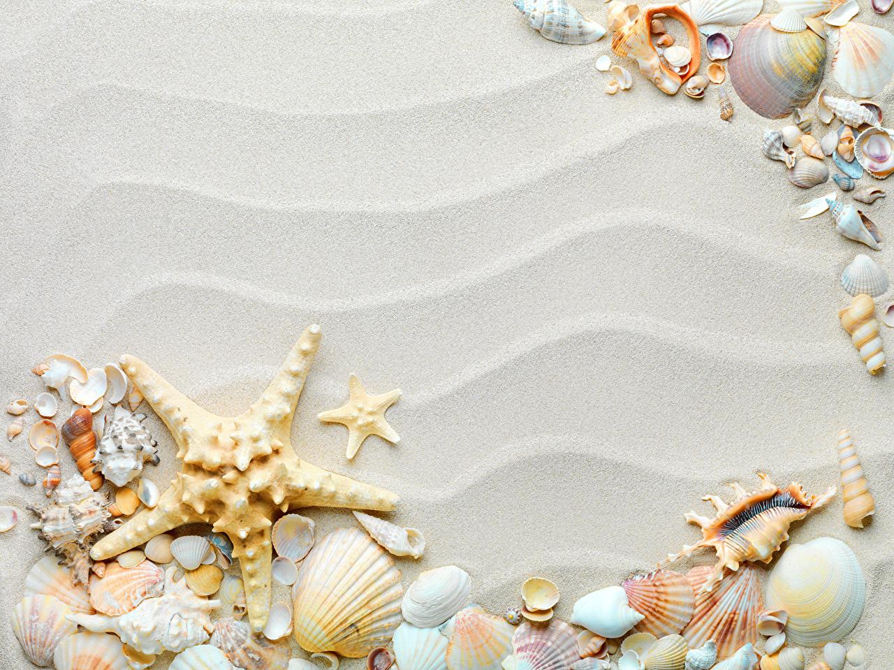 壁紙 貝殻 ヒトデ クローズアップ 砂 ダウンロード 写真