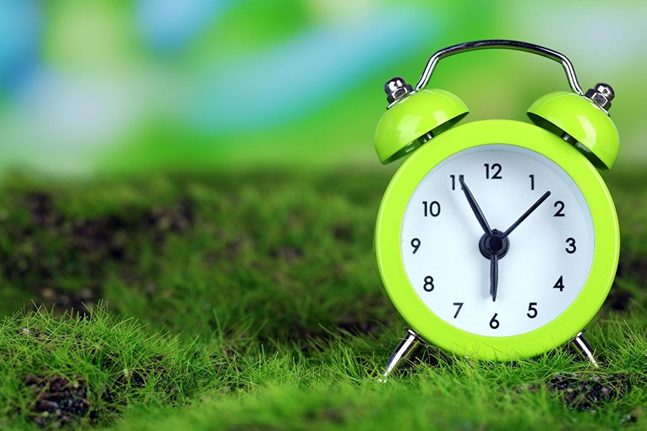 Photos Clock lime color Alarm clock Grass Closeup Yellow green