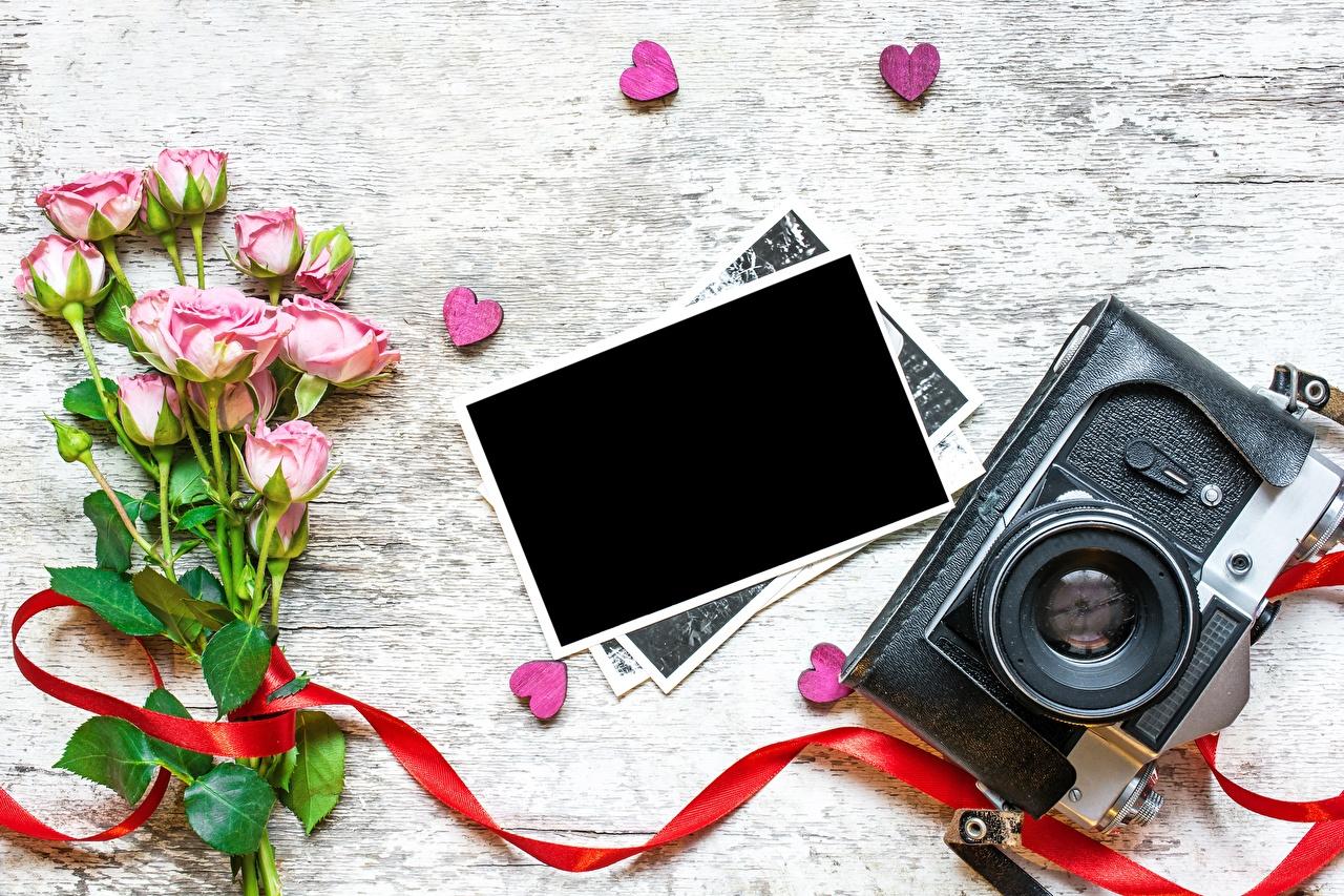 Bilder von Valentinstag Fotoapparat Herz Rose Blüte Vorlage Grußkarte Rosen Blumen