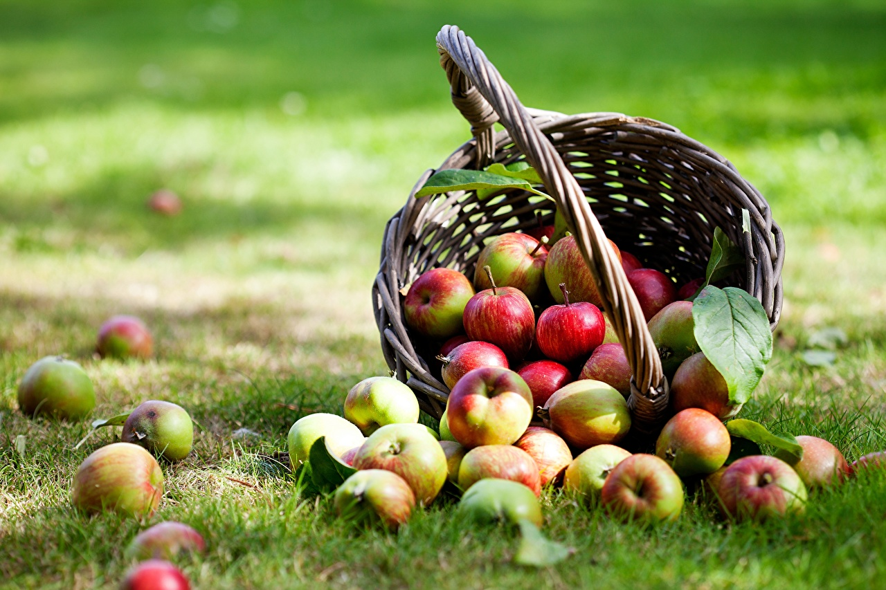 Picture Apples Wicker basket Food Grass