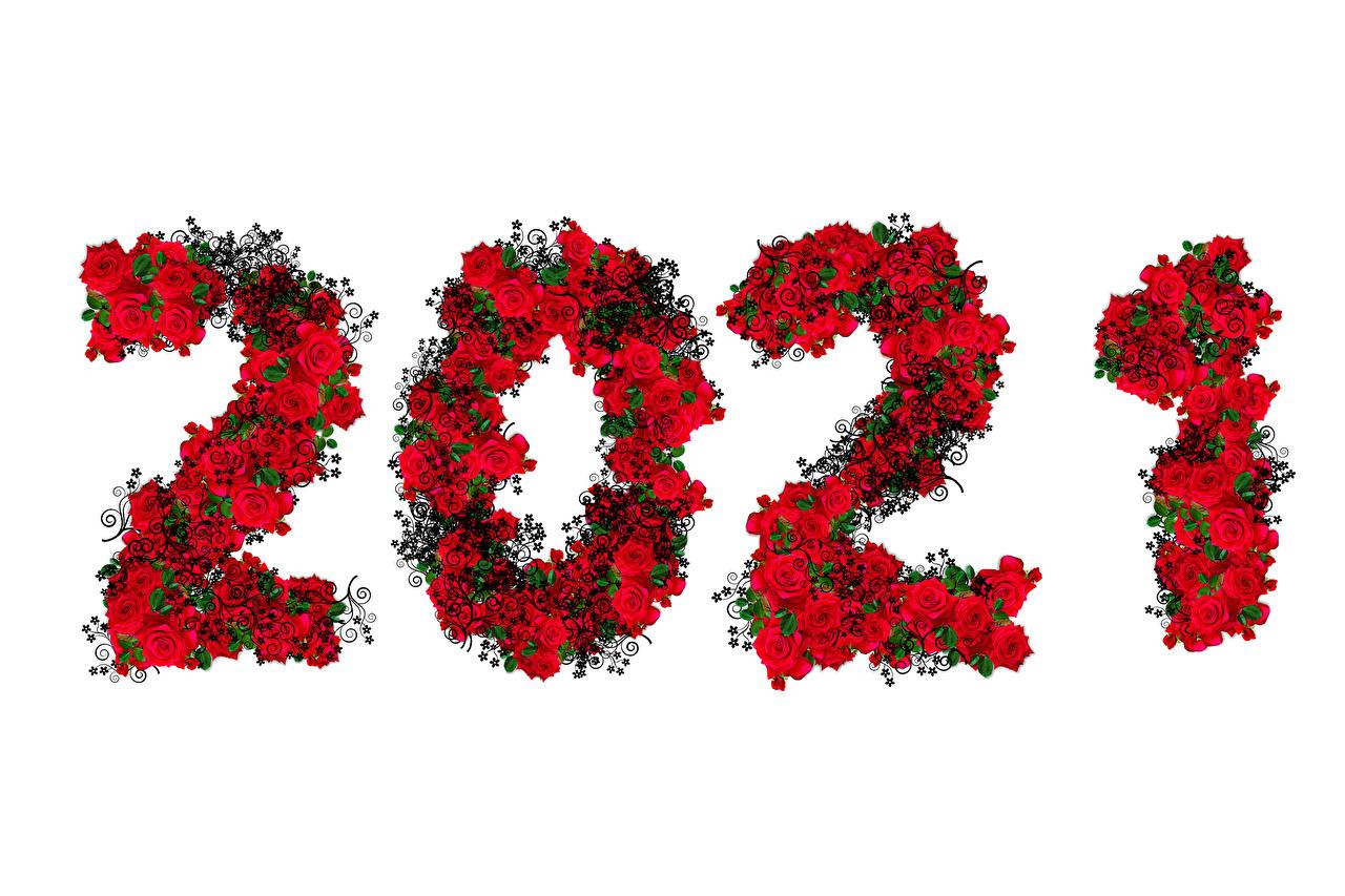 Fotos 2021 Neujahr Rose Weißer hintergrund Rosen