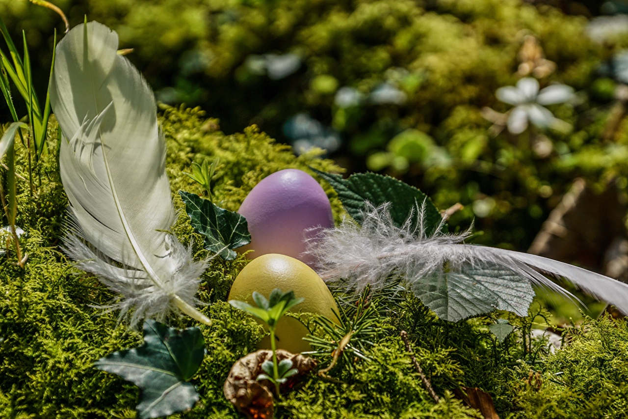 Image Easter egg Feathers Moss Eggs