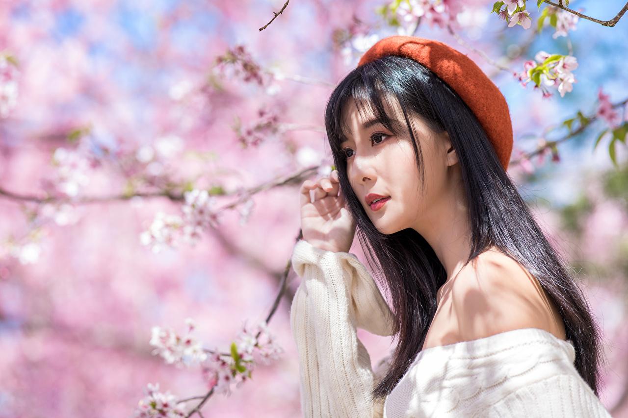 Primavera Arvores floridas Asiático Cabelo preto Meninas Boina Bokeh jovem mulher, mulheres jovens, moça, asiática, Fundo desfocado Meninas