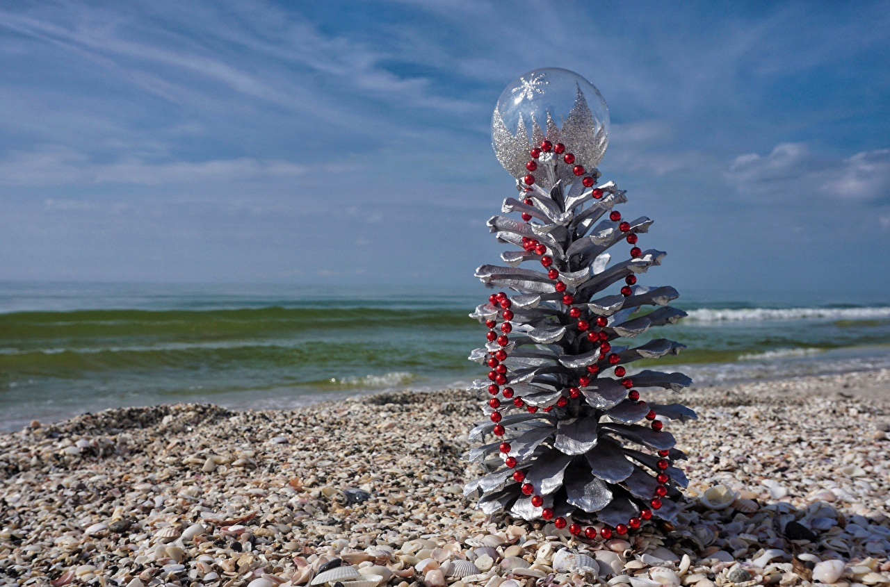 Wallpaper New year Sea Nature Shells Pine cone Christmas Conifer cone