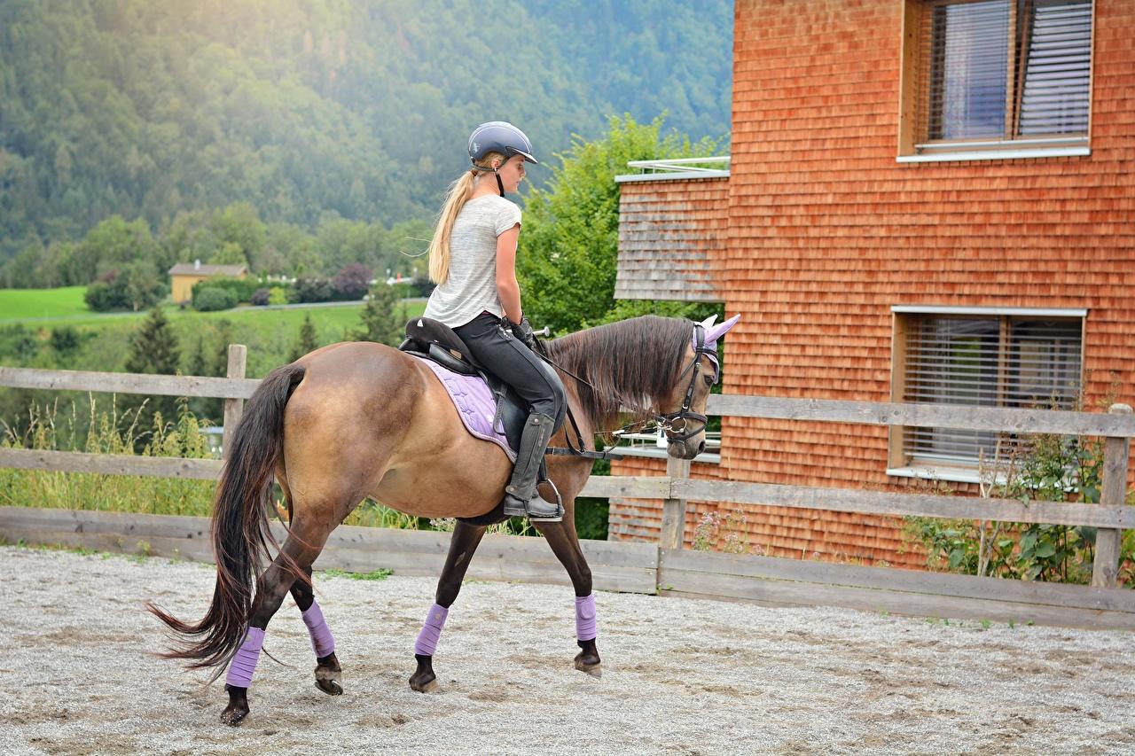 Bilder Pferd Blondine Helm Mädchens Schwanz sitzt Pferde Hauspferd Blond Mädchen junge frau junge Frauen sitzen Sitzend
