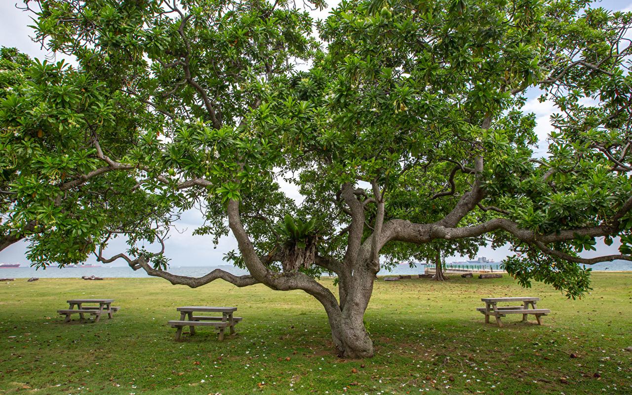 Foto Singapur East Coast Park Natur Bank (Möbel) Bäume Parks