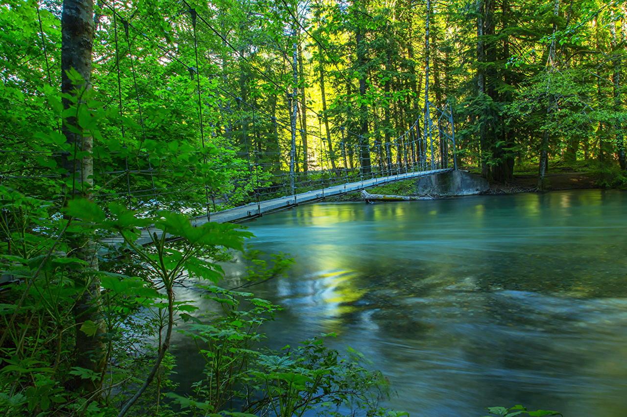 壁紙 川 森林 橋 夏 自然 ダウンロード 写真