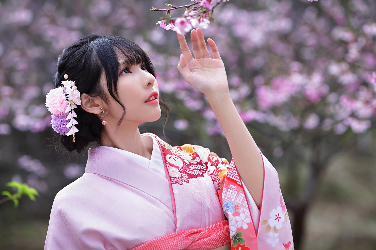 Pictures Brunette girl Cherry blossom Bokeh Kimono young woman Asiatic Hands Flowering trees Sakura blurred background Girls female Asian
