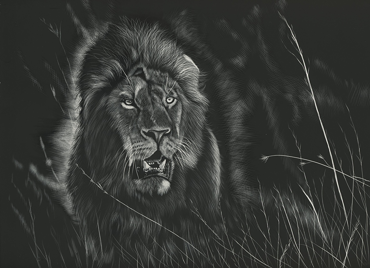Desktop Wallpapers Lions Big Cats Black And White Animals Painting