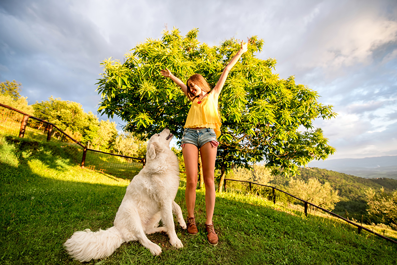 Picture Retriever dog young woman Legs Grass Shorts animal Dogs Girls female Animals