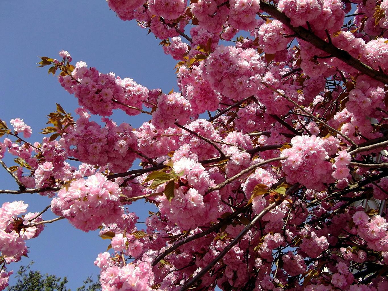 Blumen Bäume
