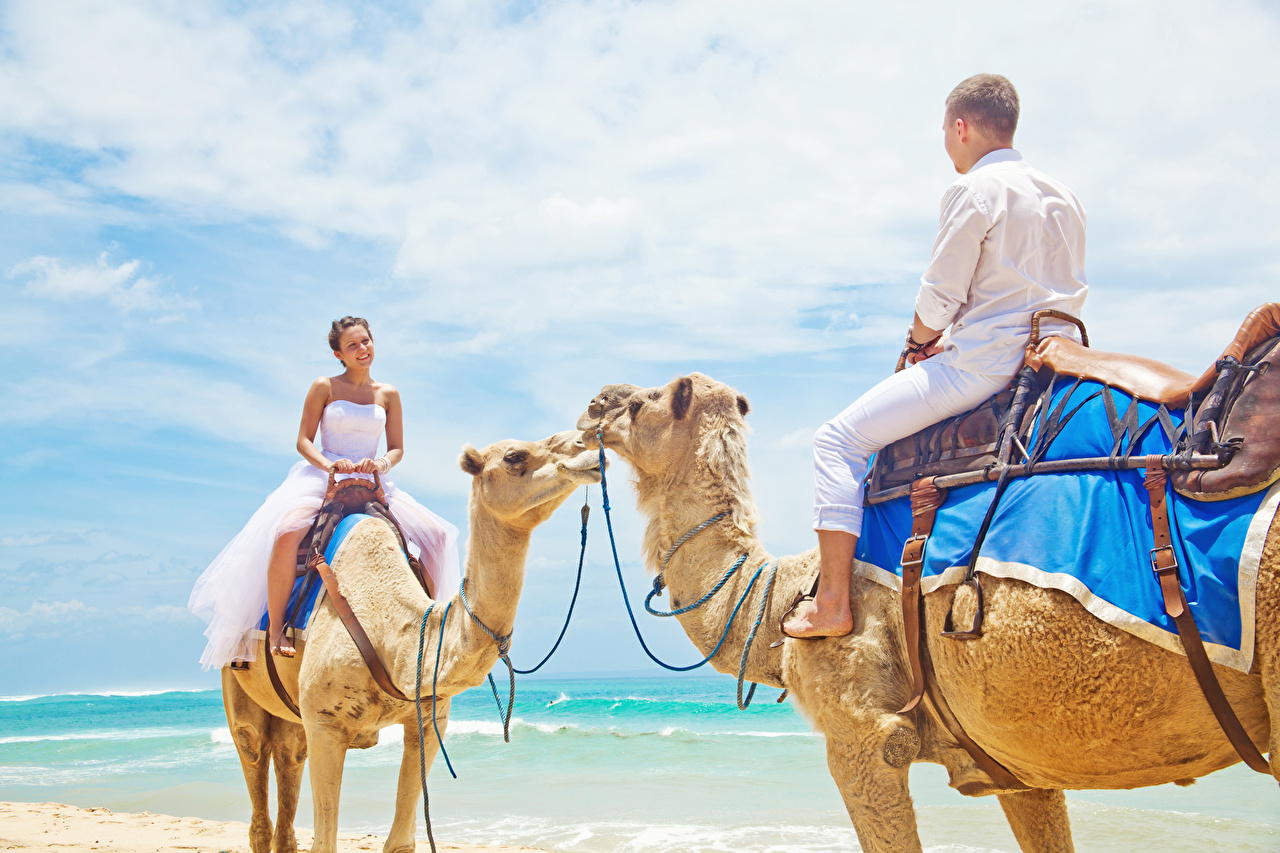 Picture Camels Bride Wedding Men 2 Girls Sky Animals noces brides marriage Man Two female young woman animal