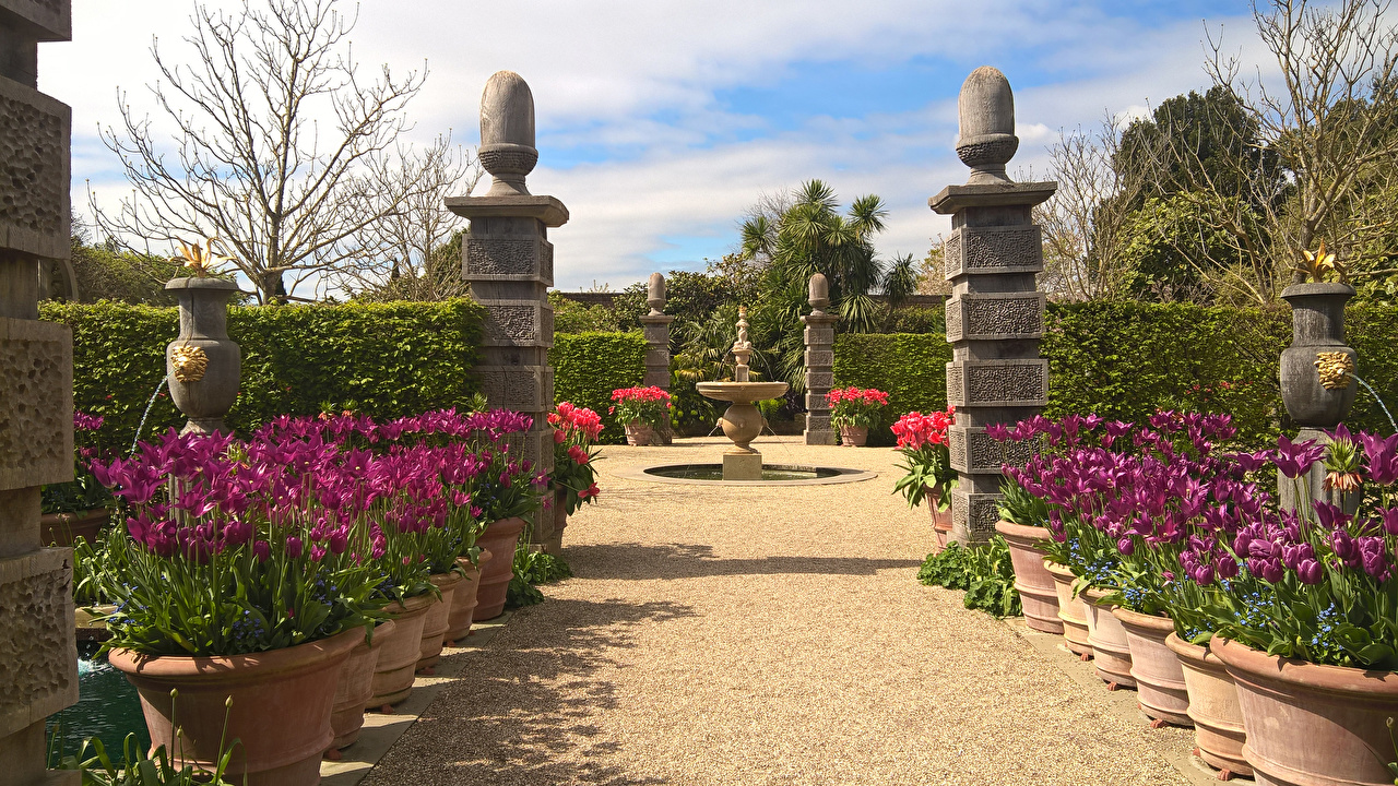 Tapeta na pulpit Anglia Fontanny Arundel Castle Gardens Natura Tulipany Ogród Krzaki fontanna tulipan przyroda ogródy krzewy
