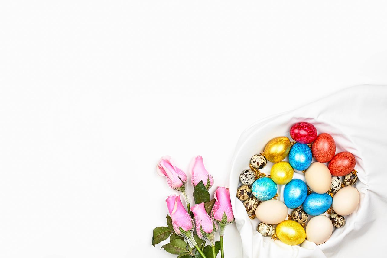 Pascua Rosas El fondo blanco Tarjeta de felicitación de la plant Rosa color Huevo Multicolor comida, flor, rosa, huevos Flores Alimentos