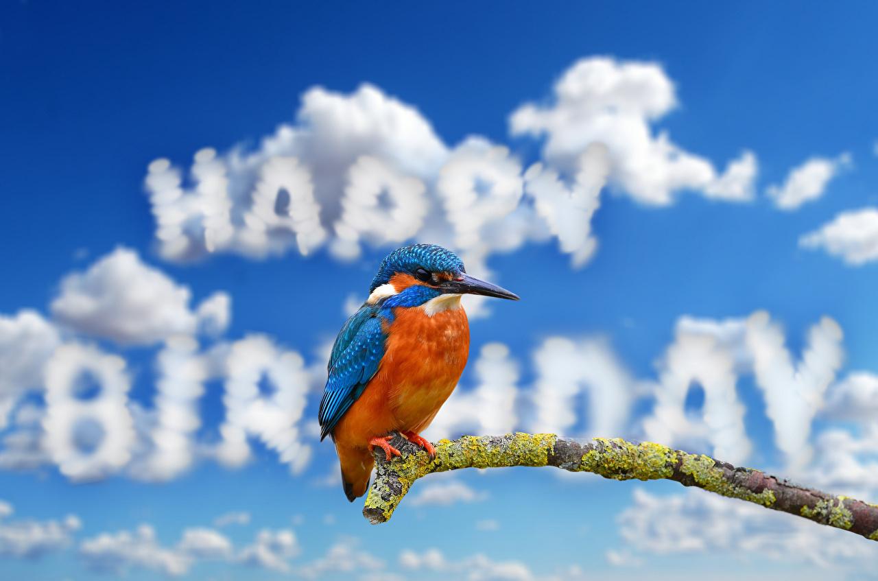 Bilder Födelsedag Kungsfiskare fågel Engelsk text Grenar Djur Molnen Fåglar engelska textning Skrivet ord