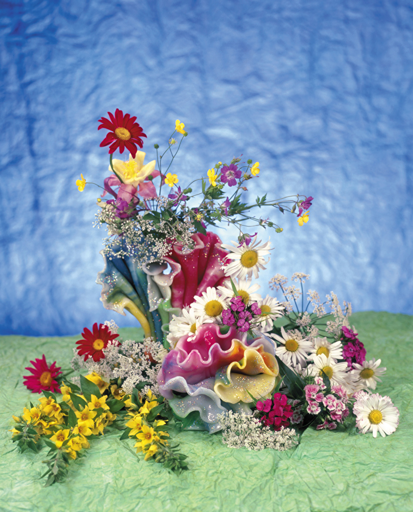 Fotos von Blüte Nelken Kamillen Design  für Handy Blumen