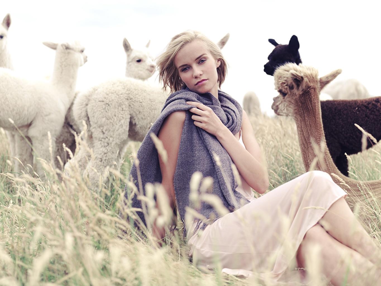 Photo Llama Blonde girl Alpaca female sit Grass Hands Staring Lama Girls young woman Sitting Glance