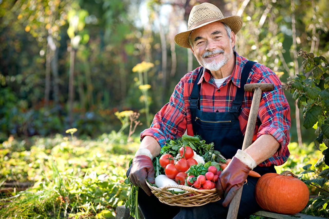 Bilder Mann Lächeln Bokeh Tomate Der Hut Kürbisse Radieschen unscharfer Hintergrund Tomaten