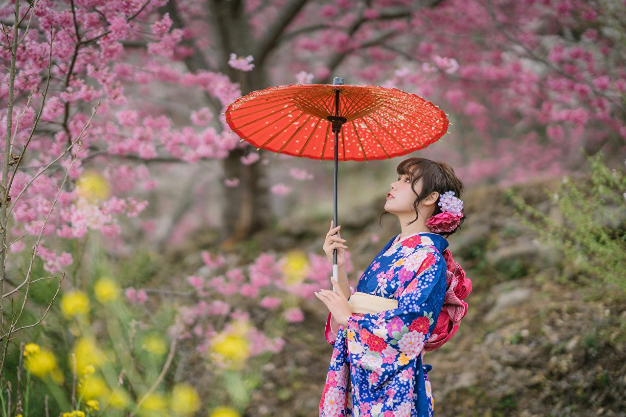 Fotos unscharfer Hintergrund Kimono Mädchens Asiaten Regenschirm Blühende Bäume Bokeh junge frau junge Frauen Asiatische asiatisches