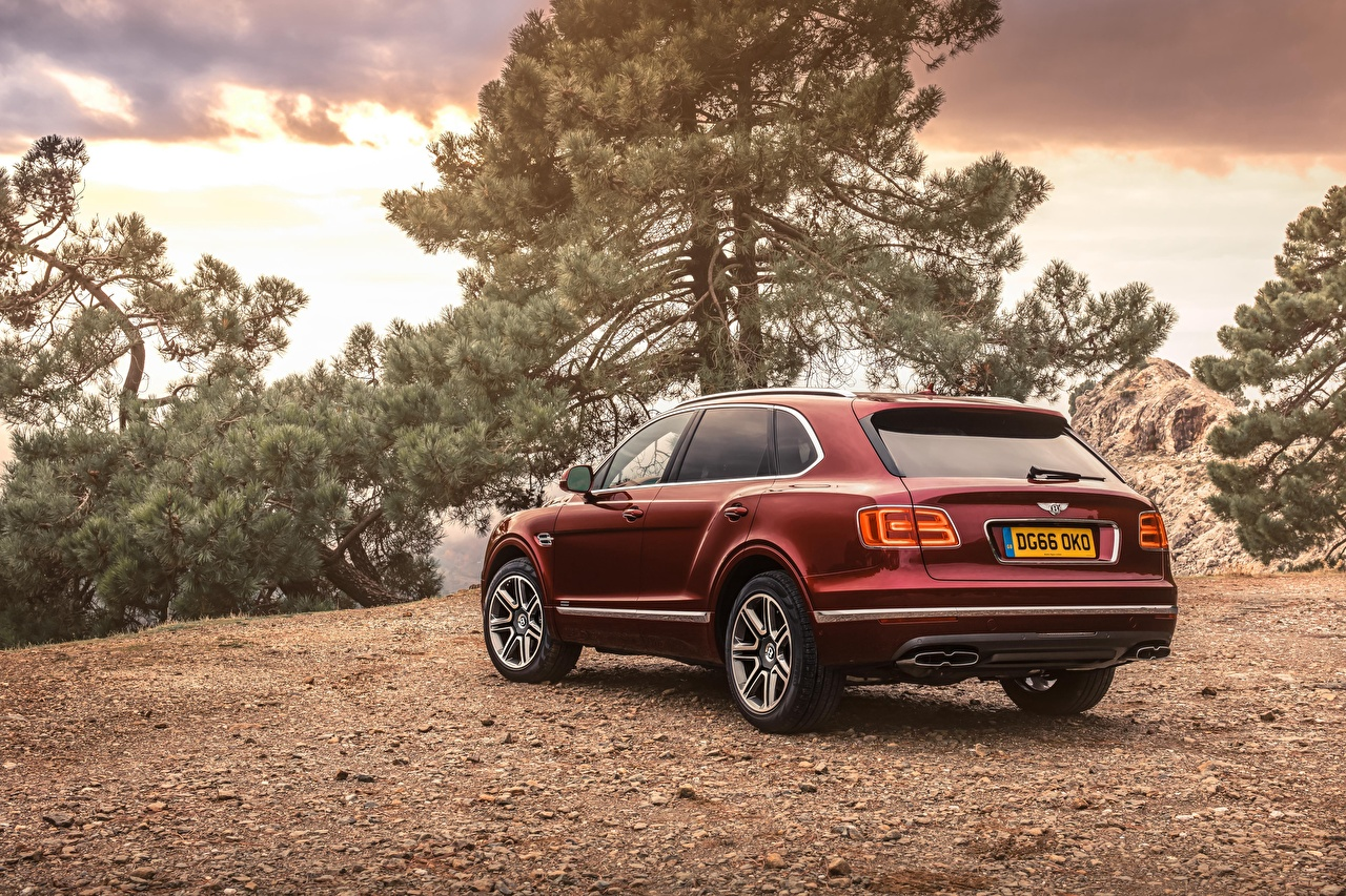 Photo Bentley Bentayga burgundy auto Back view maroon dark red Wine color Cars automobile