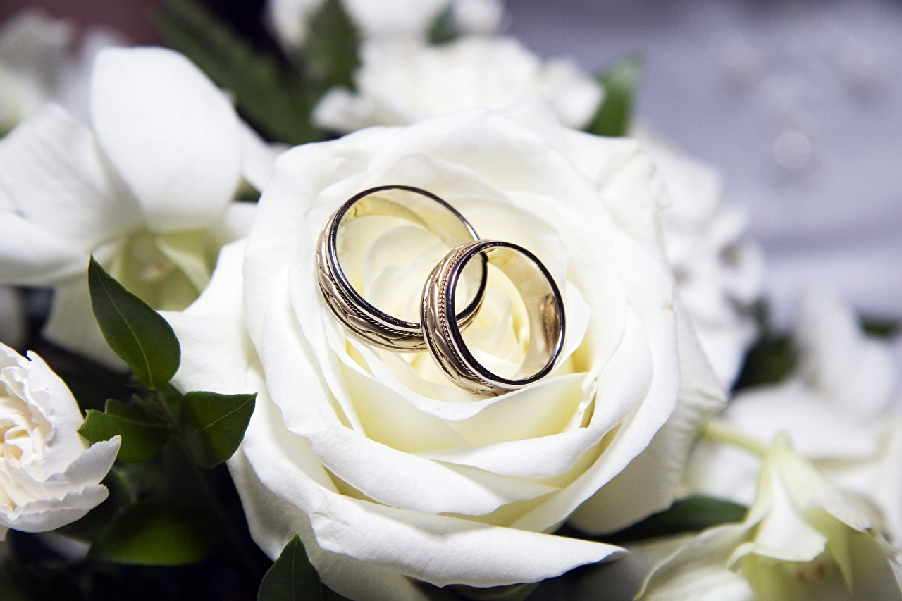 Photos Roses Ring Flowers Jewelry rose flower jewelry ring