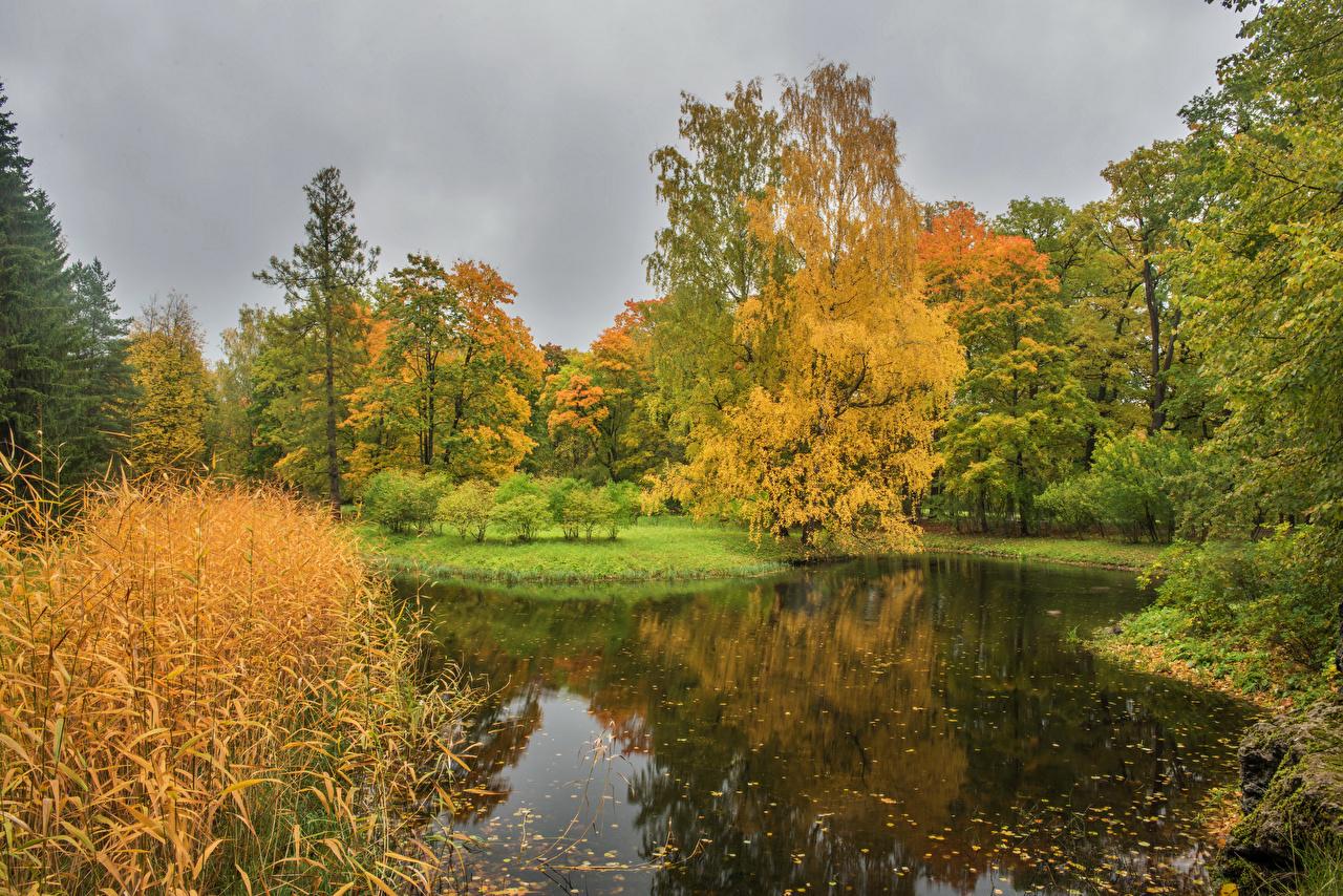 、ロシア、サンクトペテルブルク、公園、秋、池、Pushkin、木、自然