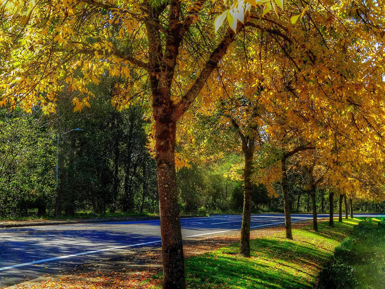 Bakgrunnsbilder Høst Natur Veier Trær vei