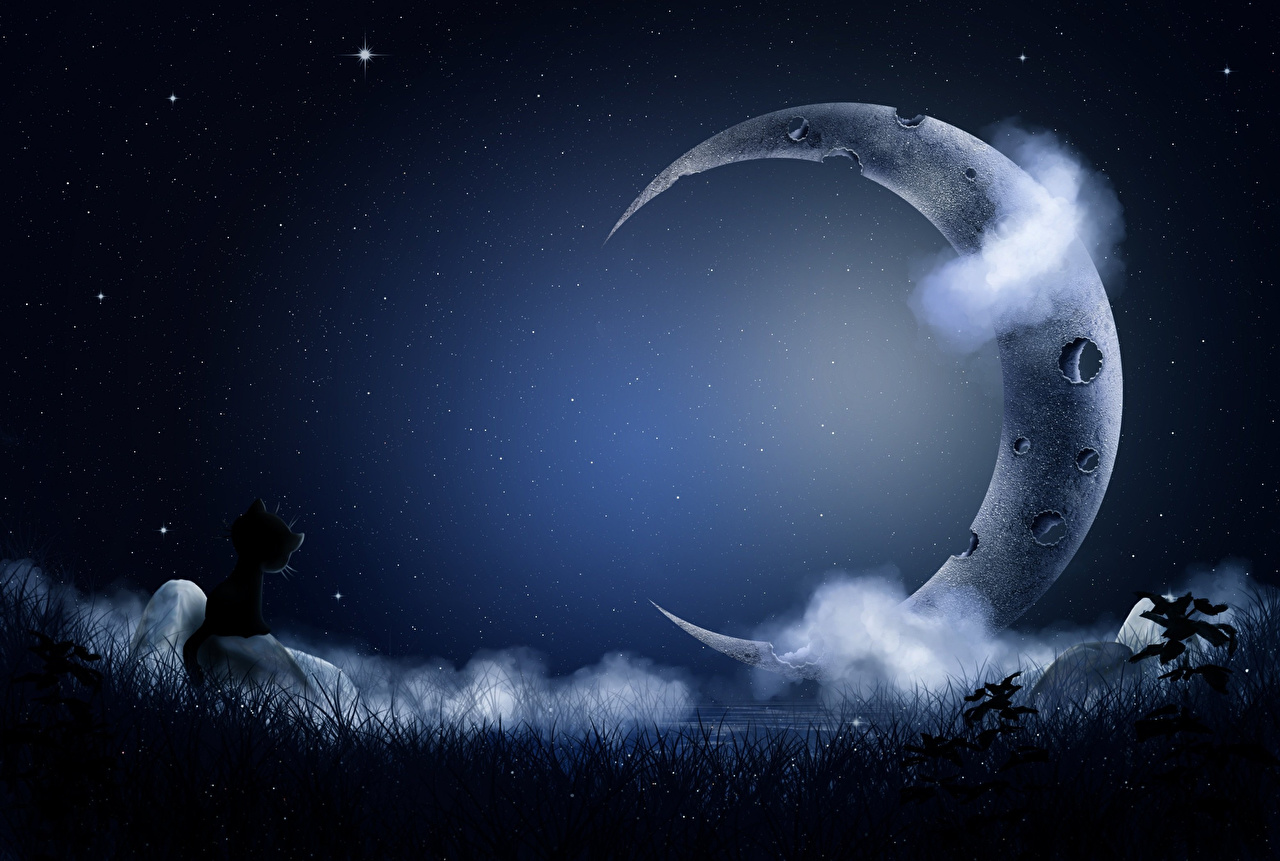 Photo Cats Stars Sky Night Crescent Clouds cat night time