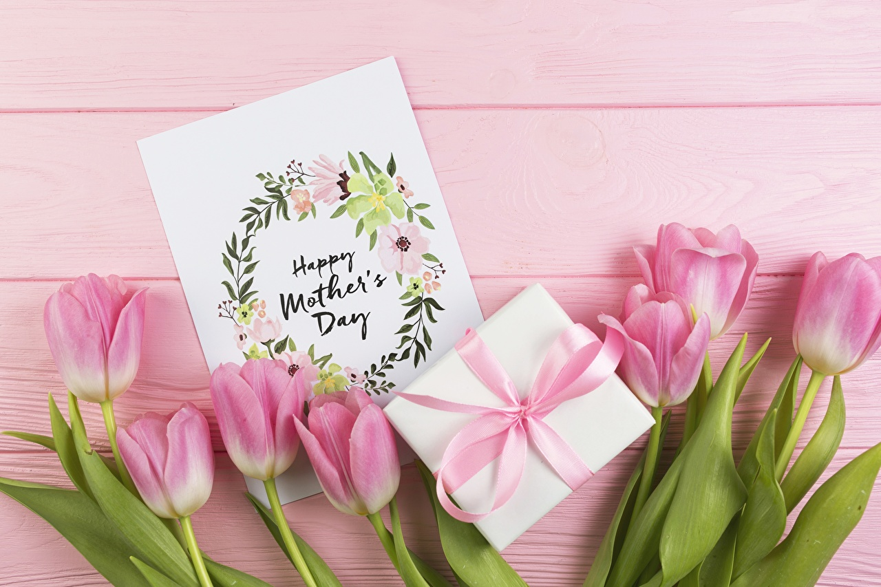 Pictures tulip Pink color Gifts Flowers Holidays Tulips flower present