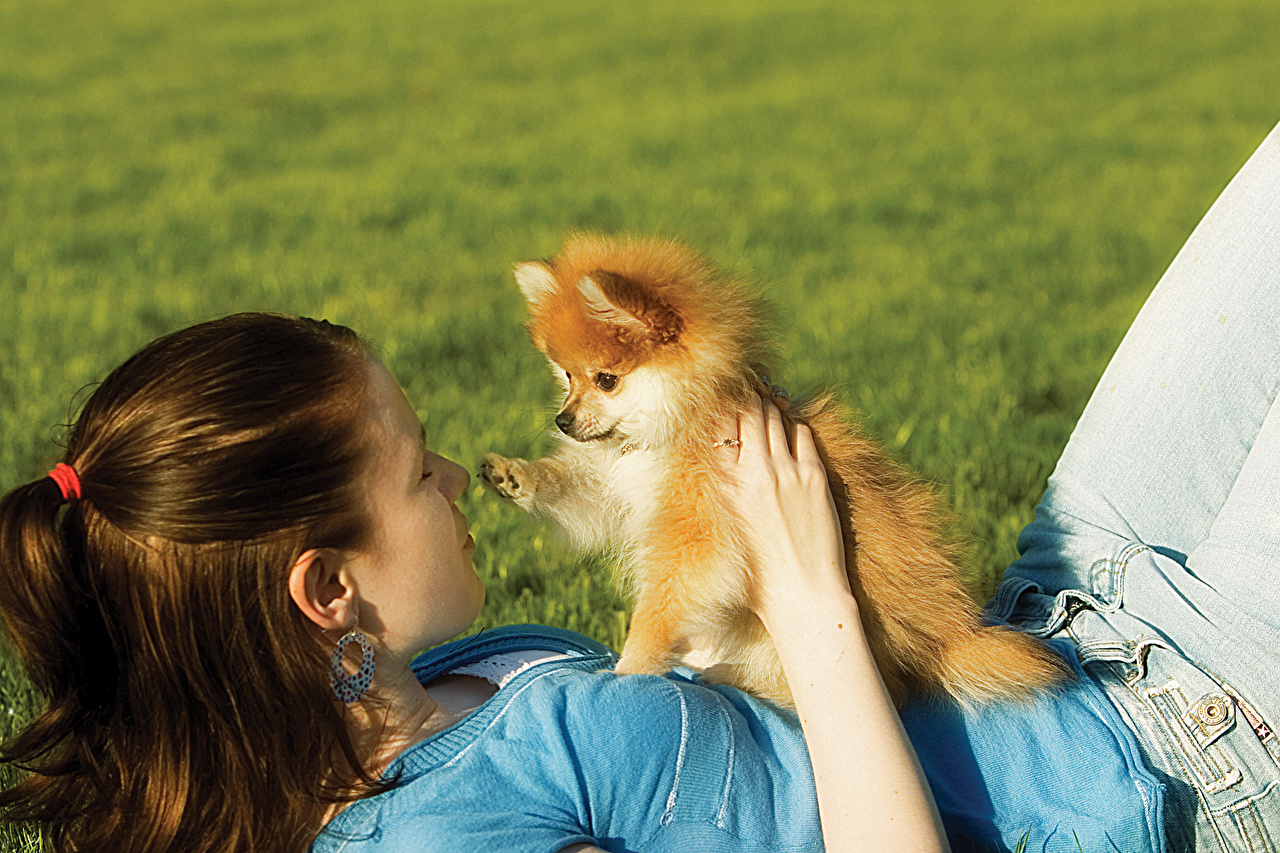 Photos Spitz Puppy Dogs Brown haired Girls female Grass animal puppies dog Girls young woman Animals