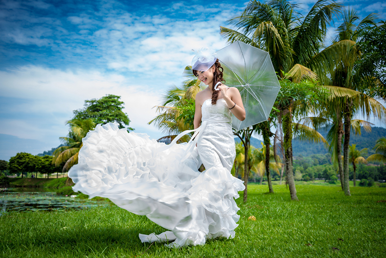 Images Bride Girls Asian Palms Umbrella Dress brides female young woman Asiatic palm trees parasol gown frock
