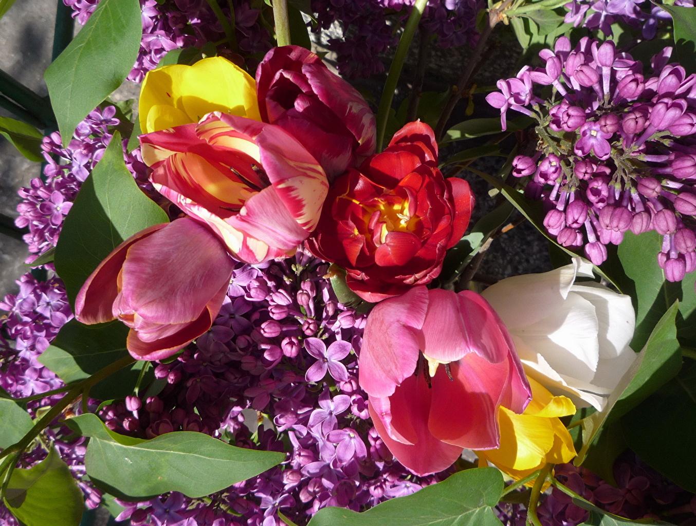 Пин от пользователя Mila Stelmakh на доске Spring is in the Air... | Цветы,  Сирень, Сиреневые цветы | 1024x1354