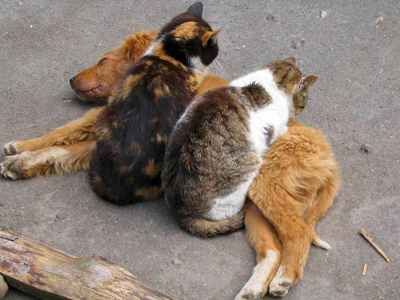 fotos von hund katze tiere