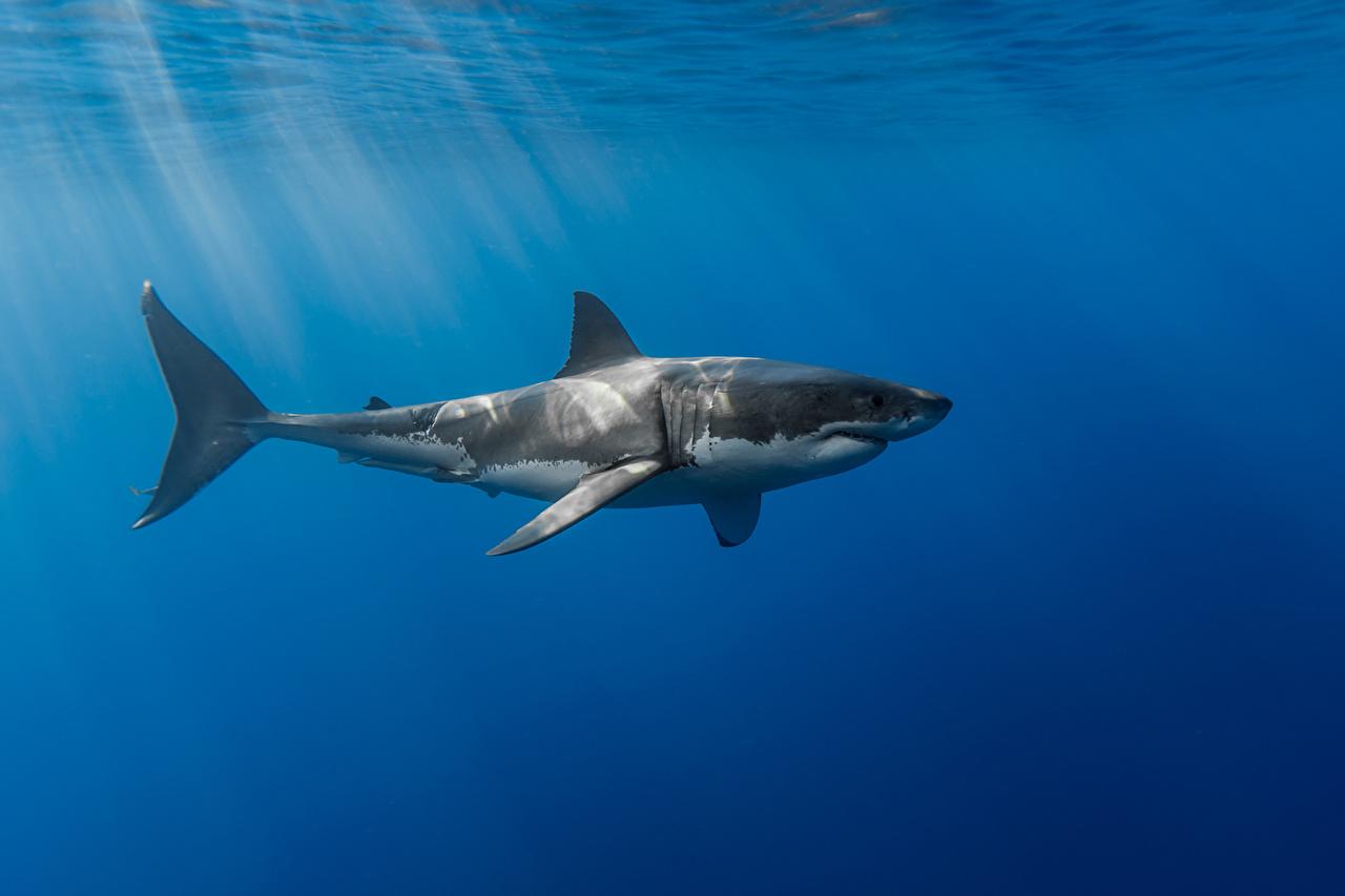 壁紙 サメ 水 光線 動物 ダウンロード 写真