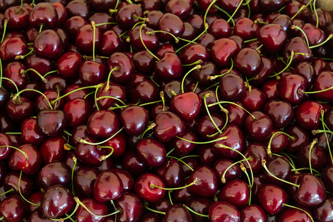 Photos maroon Cherry Food Berry Many dark red burgundy Wine color