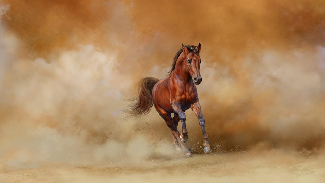 Tapety Konie Bieg Zwierzęta koń Bieganie biegnący zwierzę