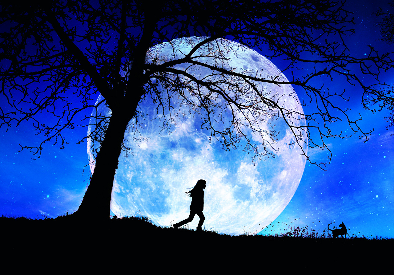 Photo Little girls silhouettes child Space Moon Branches night time Silhouette Children Night