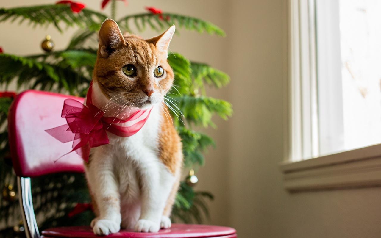 Photo Cats Bowknot animal Holidays cat bow knot Animals